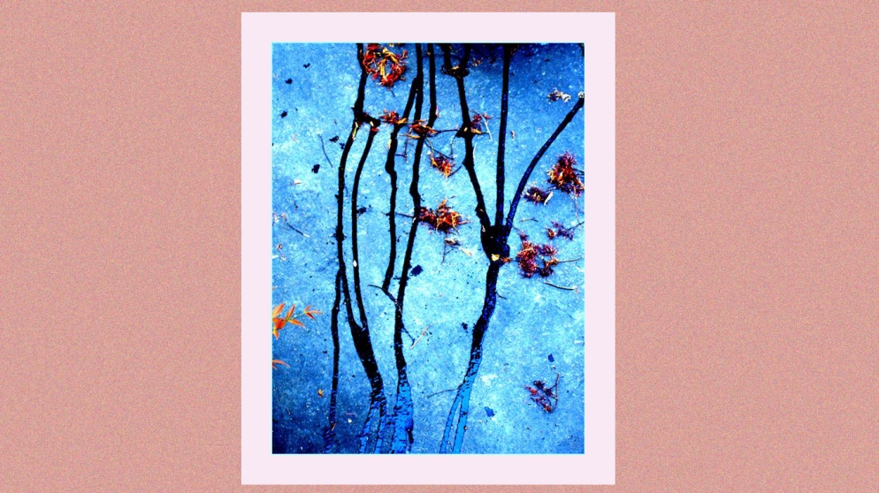 Grey Sparrow - Collage copy
